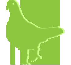 Green Pigeon
